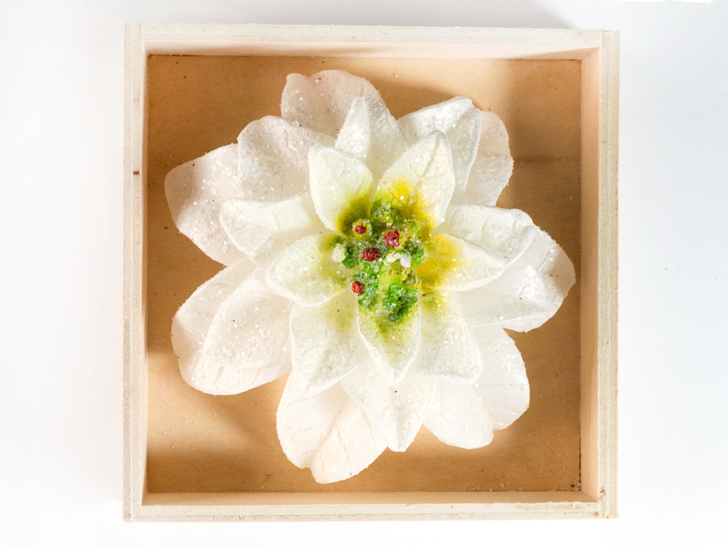 Poinsettia Mum 9,5x4 Cm Beyaz