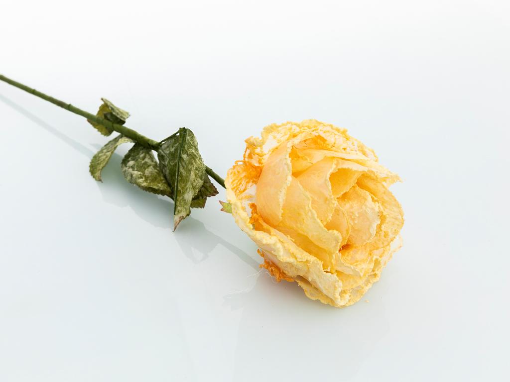 Miranda Kumaş Yapay Çıçek 75 Cm Yavruağzı