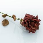 Lisa Kumaş Yapay Çiçek 64 Cm Bordo
