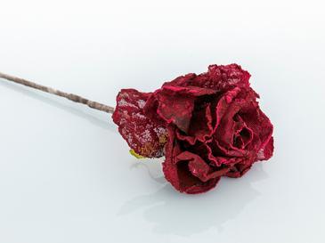 Helen Kumaş Yapay Çiçek 61 Cm Bordo