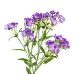 Lilac Yapay Çiçek 73 Cm Mor
