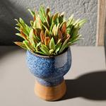 Lavender Leaves Seramik Vazolu Yapay Çiçek 13x13x18 Cm Mavi - Yeşil