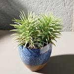 Pine Seramik Vazolu Yapay Çiçek 12x12x16 Cm Mavi - Yeşil