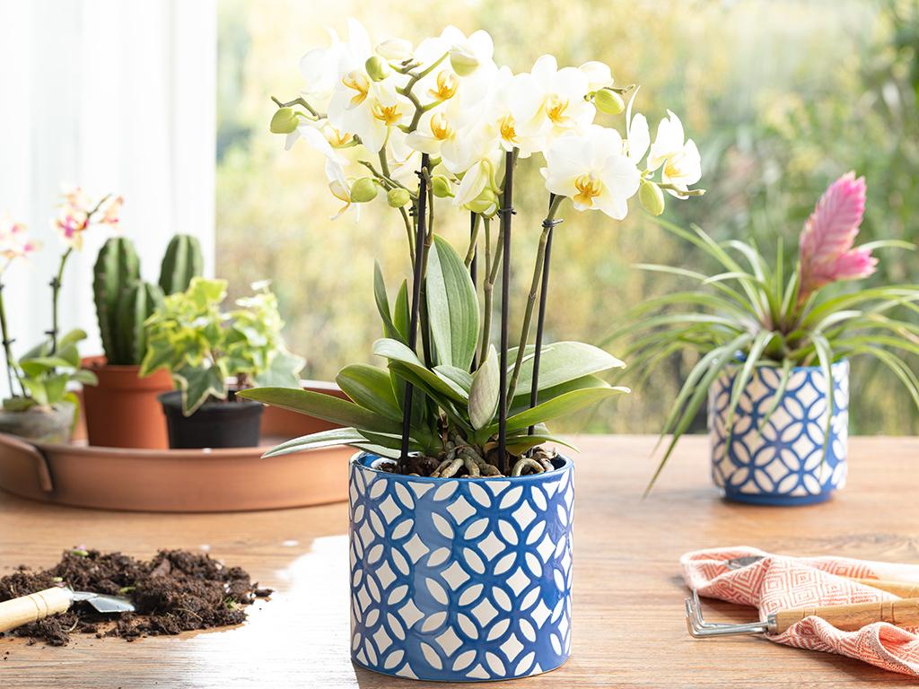 Garden Flowers ghiveci 13.5x13.5x12.5cm Albastru 10031044002