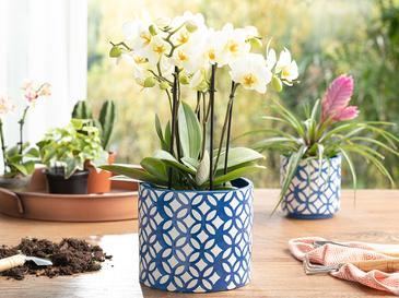 Garden Flowers Saksı 16.5x16.5x14.3 Cm Lacivert