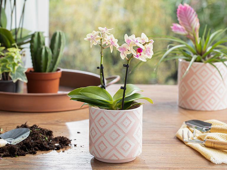 Floral Garden Saksı 10.5x10.5x10.5 Cm Pembe