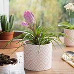 Floral Garden Saksı 13.5x13.5x12.5 Cm Pembe