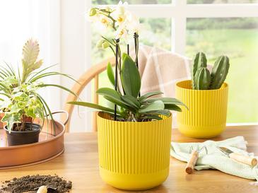 Bloom Plastik Saksı 16x16x15 Cm Zeytin Yeşili